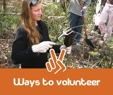Ways to Volunteer. People planting trees.